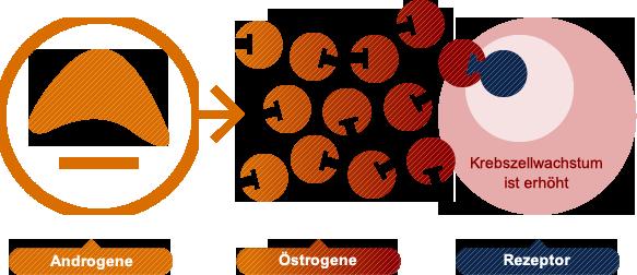 Aromatasehemmer nebenwirkungen gewichtszunahme - Lithium